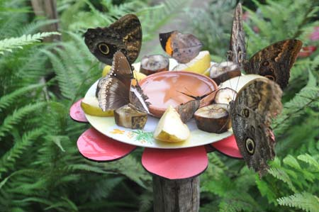 Butterfly Exhibition