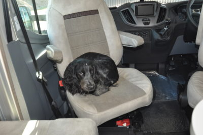 Dog pet in motorhome